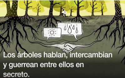 Científicos: los árboles hablan bajo tierra, usando una red que imita a internet (vídeo de la BBC)