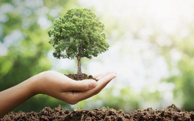 SOS: ¡¡¡si tienes un metro cuadrado de terreno planta  un árbol, lo necesitamos!!